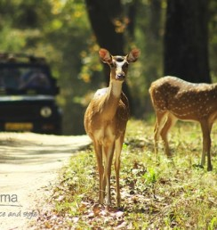 Kanha National Park featured on Prismma