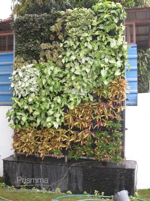 Home gardening india benefits of a vertical garden for Garden design for home in india