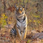 Wildlife Sanctuaries India: A new kind of tourism